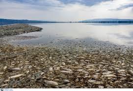 Λίμνη Κορώνεια και αγώνας για επιβίωση της πανίδας