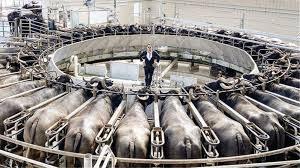 Πρόκληση Salt Bae με φωτογραφία με στριμωγμένα ζώα προς σφαγή